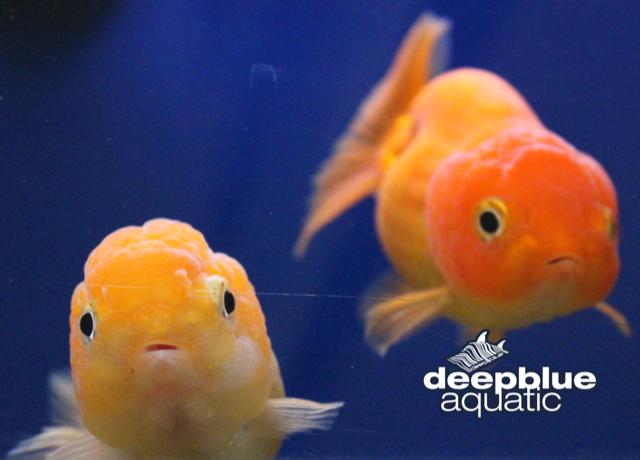 Deepblue Aquatic Aquarium And Pond Supplies